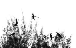 Ombre d'arbre Photographie stock libre de droits
