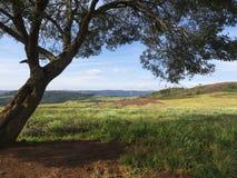 Ombre d'arbre Images stock