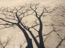 Ombre d'arbre Images libres de droits