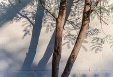 Ombre d'arbre d'avance Photographie stock