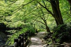 Ombre d'arbre de parc de chemin du Japon Images stock