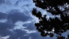 Ombre d'arbre et nuages foncés banque de vidéos