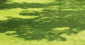 Ombre d'arbre sur l'herbe Images stock
