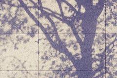 Ombre d'arbre sur le mur Photographie stock libre de droits