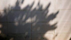 Ombre d'arbre sur le mur dans le temps de matin banque de vidéos