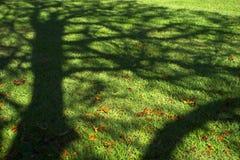 Ombre d'arbre sur un pré image stock