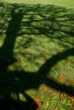 Ombre d'arbre sur un pré images libres de droits