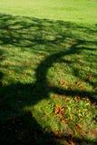 Ombre d'arbre sur un pré photographie stock libre de droits