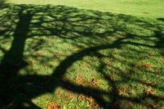 Ombre d'arbre sur un pré photographie stock