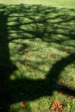 Ombre d'arbre sur un pré photos libres de droits