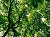 Ombre d'arbres Photographie stock