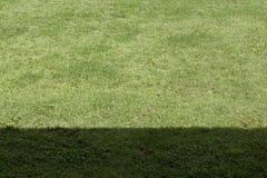 Ombre d'herbe verte et plan rapproché d'ombre Photographie stock libre de droits