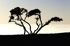 Ombre d'un arbre au coucher du soleil Images stock