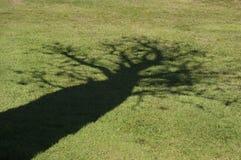 Ombre d'un arbre de boab Photos stock