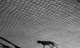 Ombre d'un chien photos libres de droits