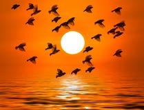 Ombre d'un oiseau Photographie stock libre de droits