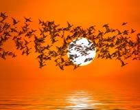 Ombre d'une silhouette de canards de migration d'oiseau photographie stock