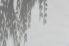 Ombre dagli alberi che cadono sul recinto Immagine Stock Libera da Diritti