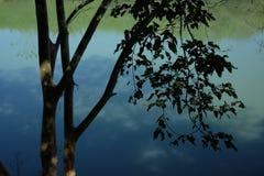 Ombre dans la brume Image stock
