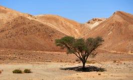 Ombre dans le désert Images libres de droits