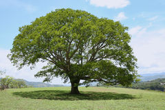 Ombre de bâti d'arbre Image stock