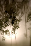 Ombre de bambou Image libre de droits