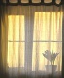 Ombre de fenêtre Images stock
