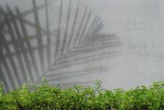 Ombre de feuille sur le mur en béton Images libres de droits