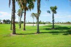 Ombre de fonte de palmiers au-dessus de fairway de terrain de golf Images libres de droits