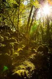 Ombre de Foresta Image libre de droits