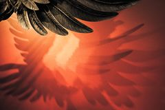 Ombre de l'aile Photo libre de droits