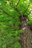 Ombre de l'arbre Image stock