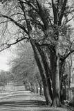 Ombre degli alberi di caduta e della strada campestre sola Immagini Stock