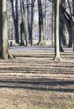 Ombre degli alberi nel parco fotografia stock libera da diritti