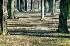 Ombre degli alberi nel parco immagine stock libera da diritti