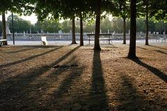 Ombre degli alberi nel parco al tramonto fotografia stock libera da diritti