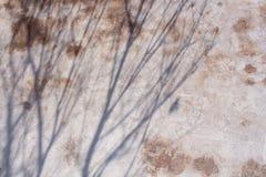 Ombre degli alberi sulla parete Fotografia Stock