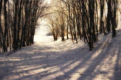 Ombre degli alberi in una foresta congelata all'inverno Fotografie Stock Libere da Diritti