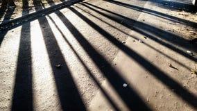 Ombre del pino Immagine Stock