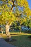 Ombre dell'albero Fotografie Stock