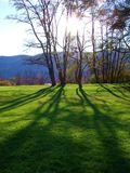 Ombre dell'albero su erba Fotografia Stock Libera da Diritti