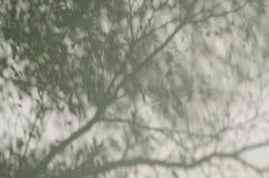 Ombre dell'albero sulla parete Fotografie Stock Libere da Diritti