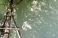 Ombre dell'albero sulla parete Fotografia Stock