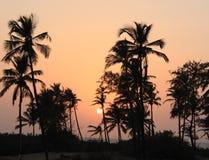 Ombre delle palme al tramonto fotografie stock