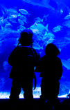 Ombre des enfants regardant dans un aquarium photo libre de droits