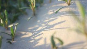 Ombre des plantes vertes Photo libre de droits