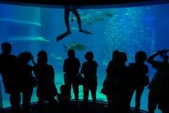 Ombre des touristes prenant des photos et appréciant des créatures de mer chez Osaka Aquarium Kaiyukan à Osaka, Japon Photos libres de droits