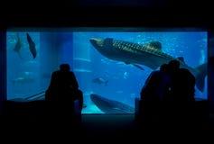 Ombre des touristes prenant des photos et appréciant des créatures de mer chez Osaka Aquarium Kaiyukan à Osaka, Japon Image libre de droits