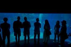 Ombre des touristes prenant des photos et appréciant des créatures de mer chez Osaka Aquarium Kaiyukan à Osaka, Japon Images libres de droits