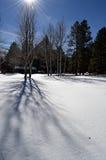 Ombre di Aspen nell'iarda del ranch Fotografie Stock